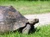 Schildkröte im Museumskomplex 1