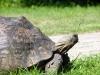 Schildkröte im Museumskomplex 2
