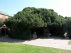 Old Post Tree - Der Alte Postbaum